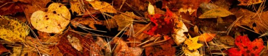 cropped-banner-autumn-leaves